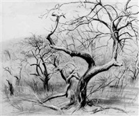 tree study by lawrence beall smith