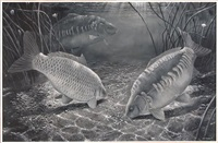 night feeding carp by david miller