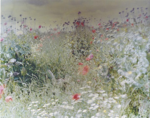 wild flowers by ori gersht