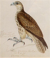 new world bird by heinrich gottlieb reichenbach