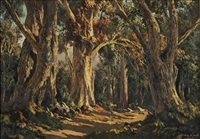 knysna forest by tinus de jongh