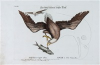 a large group of bird and animal prints by johann michael seligmann
