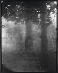 untitled (antietam #16). oversized by sally mann