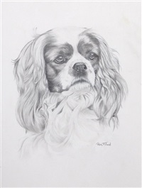 cavalier king cocker spaniel by rex flood