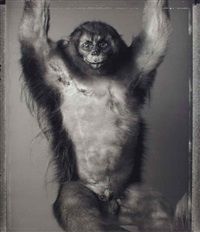 singe à la cicatrice, paris (from animal) by bettina rheims