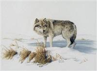 wolf by marla wilson