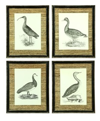 glossy ibis (+ 3 others; 4 works) by prideaux john selby