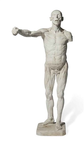 ecorche figure of a man after eugene simonis by continental school 19