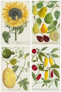 botanicals (from phytanthoza iconographia) by johann wilhelm weinmann