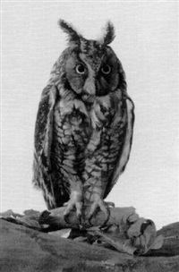owl by st. julian fishburne