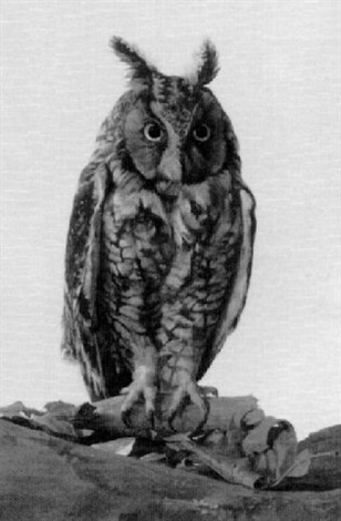 owl by st julian fishburne