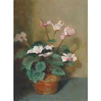 cyclamen in a terracotta pot by beatrice hagarty robertson