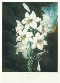 the white lily by j.c. stadler
