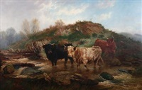 highland cattle at a stream by wilson hepple