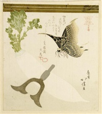surimono - still life with a white radish, a butterfly hovering above (shikishiban) by hokkei
