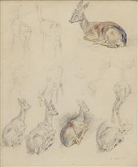 etudes d'oiseaux, de faons et de lièvre (14 works) by edouard paul merite