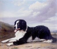 a collie on guard by v. d' hont