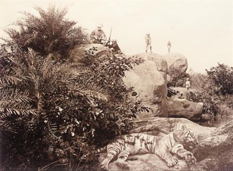 dead tiger by william willoughby hooper