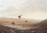 grouse in the mist by ian macgillivray