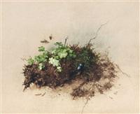 waldbodenstück mit klee und mistkäfer by willy kriegel