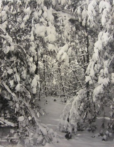 snow on trees by ansel adams