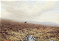grouse in flight by ian macgillivray