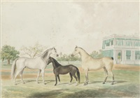horses and a foal infront of government house, madras by s. fonceca