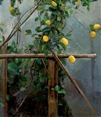 limonero by josé luis resino