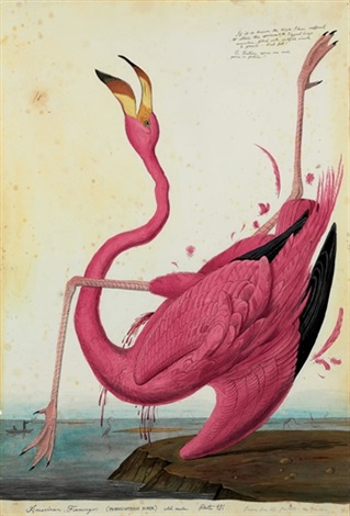 american flamingo by walton ford