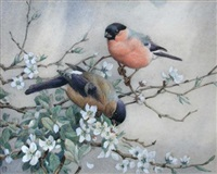 bullfinches by winifred marie louise austen