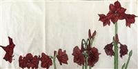 amaryllises (on 3 sheets) by erik bart andriessen