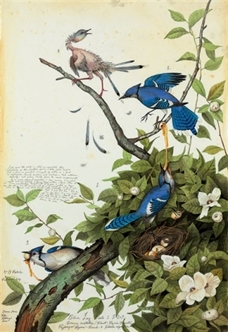 blue jay by walton ford