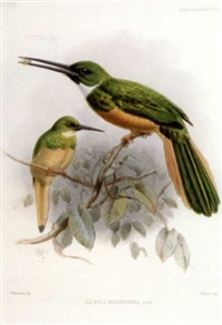 a monograph of the jacamars and puff-birds or families galbulidae and bucconidae by philip lutley sclater