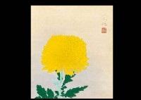 chrysanthemum by fuku akino
