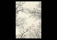 new york central park, treetop in early spring by soichiro tomioka