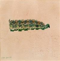 caterpillar (+ hymenoptesa, 1925, woodcut; 2 works) by walter spies