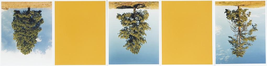 ponderosa pines princeton bc cat hi way yellow by rodney graham
