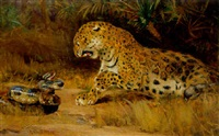 confrontation between leopard and snake by john macallan swan