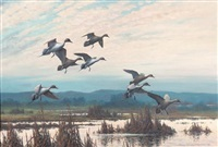 pintails by harry curieux adamson