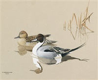 pintails by james fenwick lansdowne