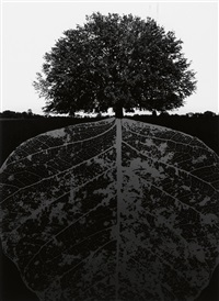 jerry n. uelsmann portfolio, with 10 (of 10) of uelsmann's fantastical photographs by jerry uelsmann