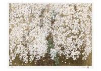 cherry blossoms in kamiyama pref by chinami nakajima