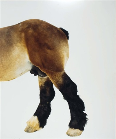 sans titre cheval by eric poitevin
