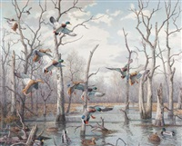 mallards in the timber by harry curieux adamson