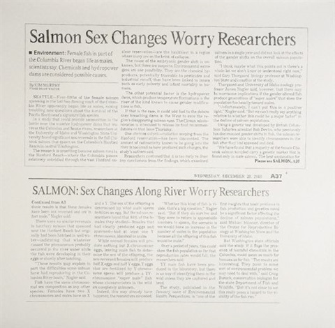 untitled salmon sex changes by karl haendel
