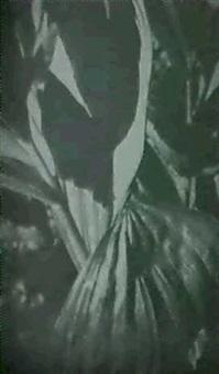 skunk cabbage by stella simon