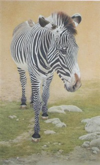 zebra by sally hynard