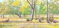 flock of wild turkeys by gordon allen