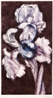 white iris by william kentridge