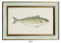 fish (12 works from a history of the fishes of the british isles) by jonathan couch